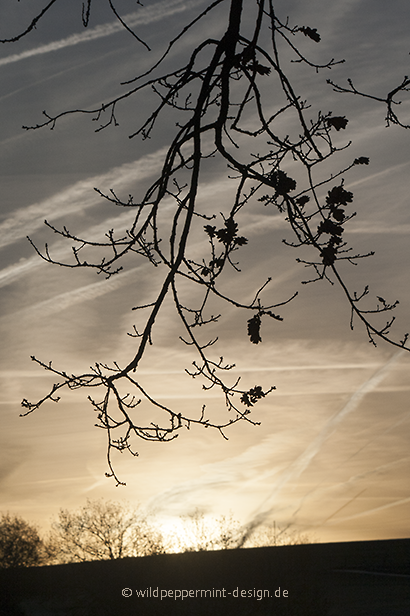 Sonnenaufang im Frühwinter, goldener Morgen / © wildeschoenheiten.wordpress.com